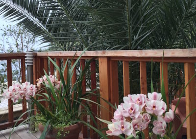 terrasse-bois-plantes-chalet